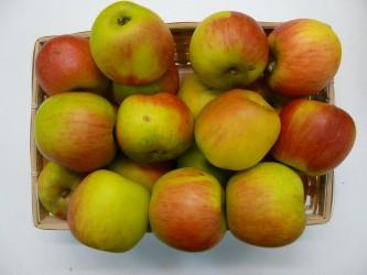 cueillette des pommes plaisir